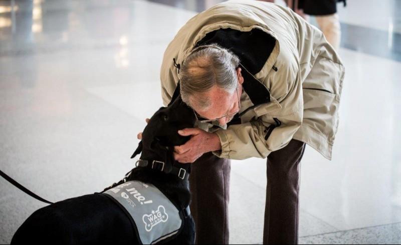 Perros de terapia en aeropuerto