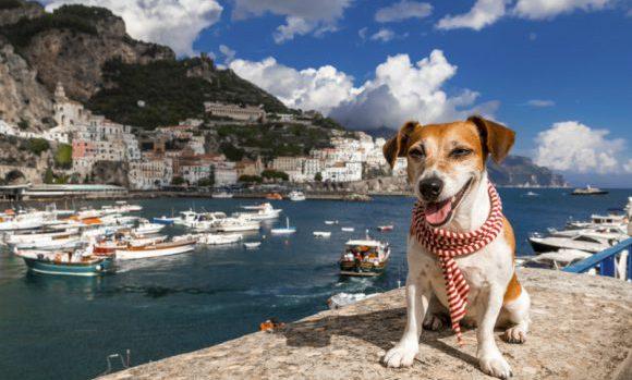 Consejos Viajar con tu Mascota